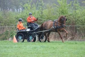Menwedstrijd deventer paard 2015